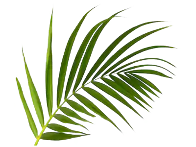 Real Leaf Palm